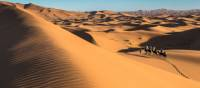 Camel riding on the Erg Chebbi dunes in the Sahara desert | Richard I'Anson