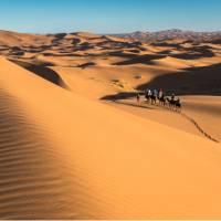 Camel riding on the Erg Chebbi dunes in the Sahara desert   Richard I'Anson