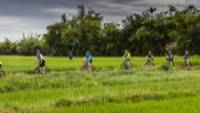 Rice paddy cycling from Hue to Hoi An, Vietnam |  <i>Richard I'Anson</i>