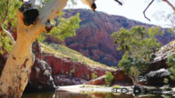 Ormiston Gorge in the Northern Territory | Alan Levy