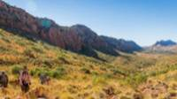 Trekkers making their way along the Larapinta Trail |  <i>Gavin Yeates</i>