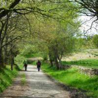 Pilgrims on the trail to Santiago in the Galicia region   Erin Williams