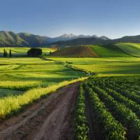 Vineyard in Rioja, a region known for its gastronomic riches