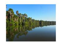 Trees line the lagoon in Tambopata Reserve |  <i>Lindsey Van Loon</i>